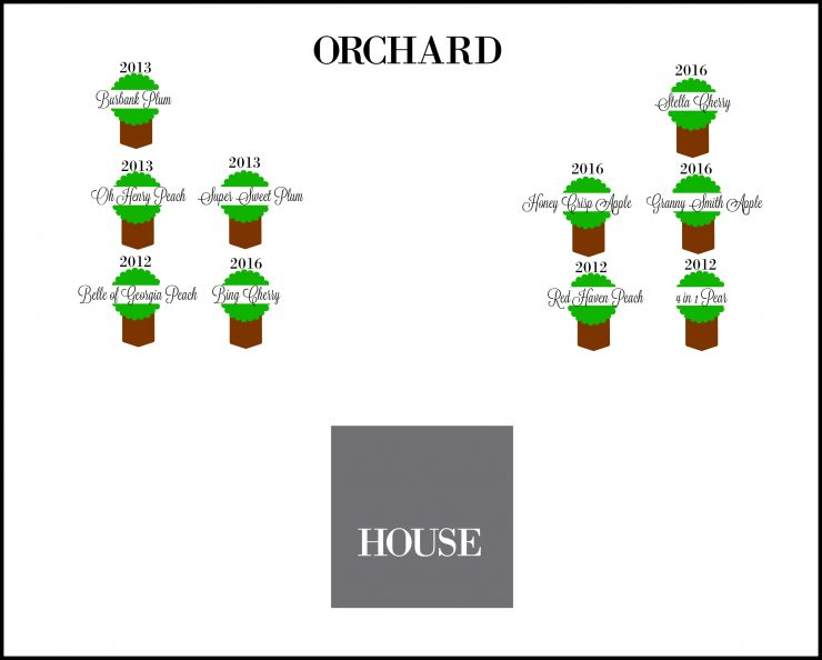Fruit Orchard Layout Using PicMonkey