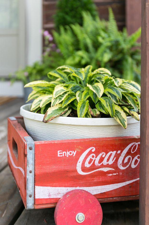 Cola Planter
