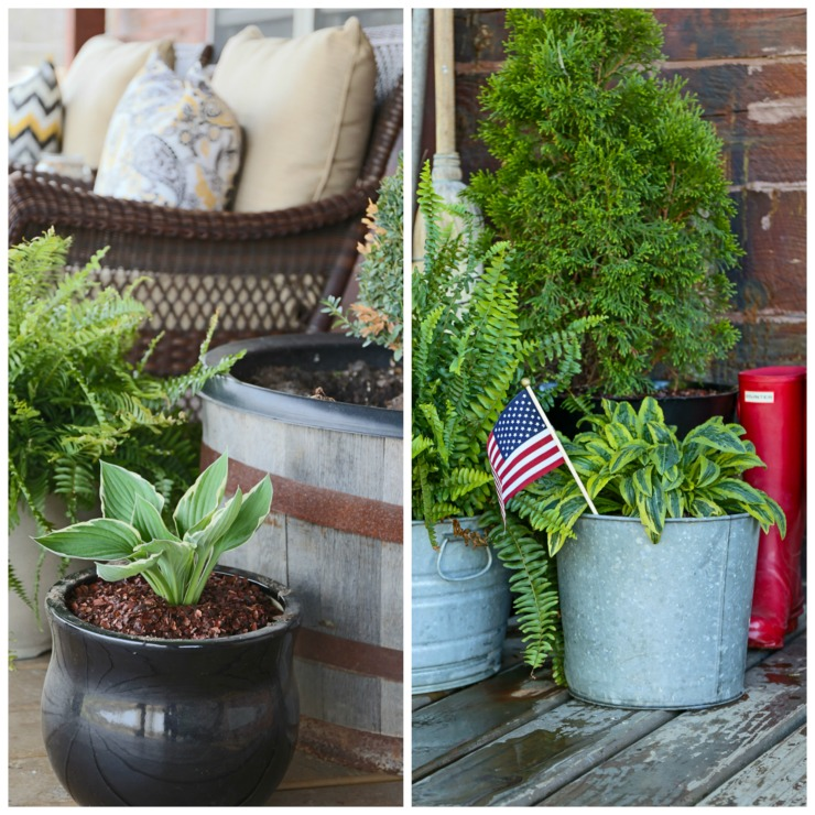 Potted Perennials, Ferns, Boxwood, and Cypress