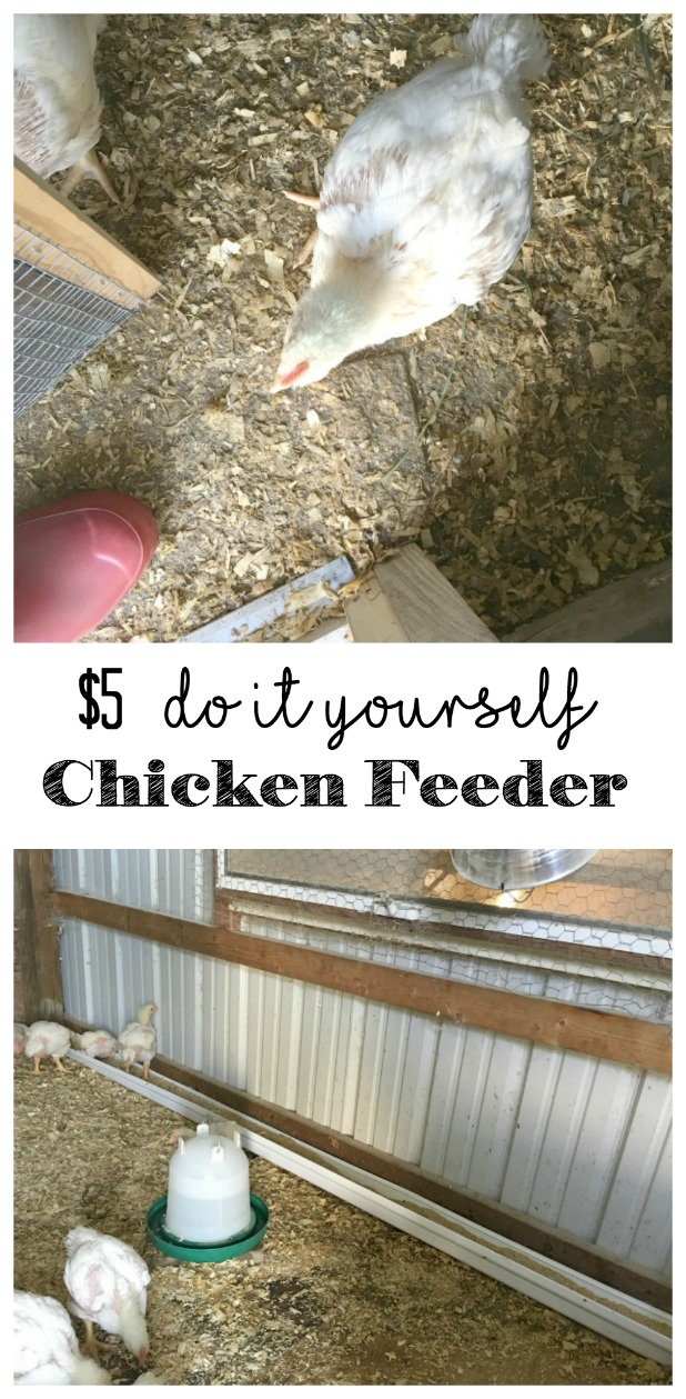 How to make a chicken feeder for $5 that feeds 45 meat chickens