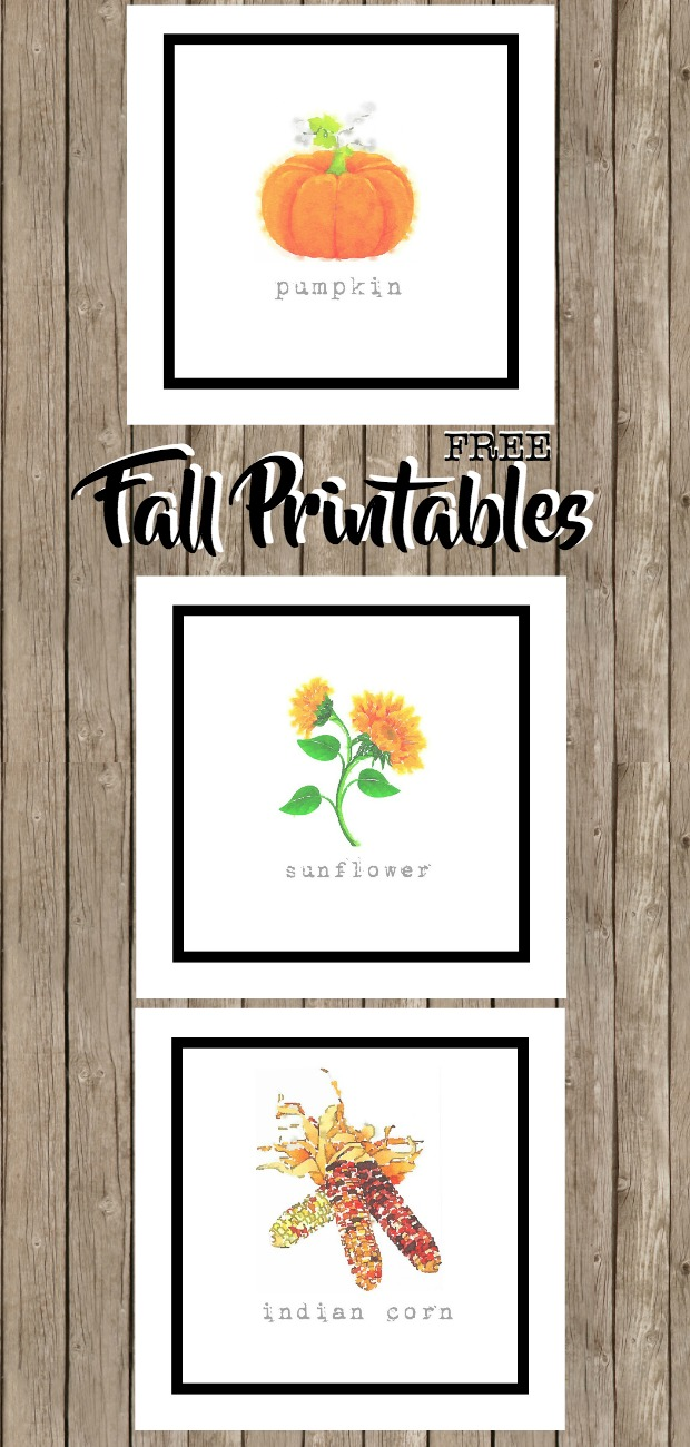 Fall Harvest Printables, Sunflower, Pumpkin, Indian Corn, Watercolors, FREE to Download and Print. Popular Pin!