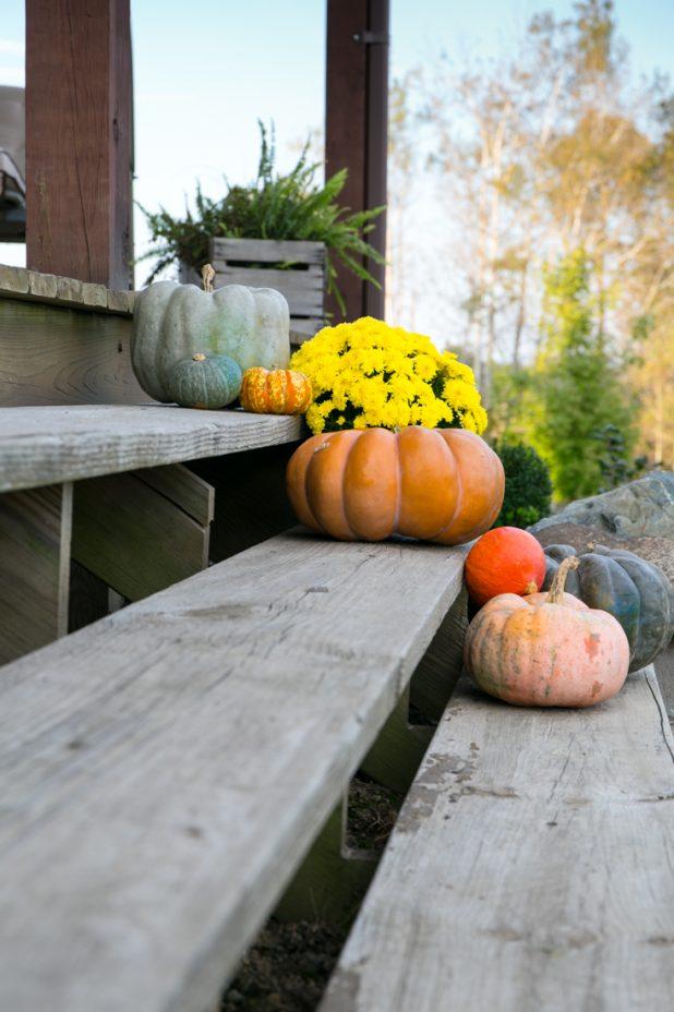 Pumpkins on Porch Steps