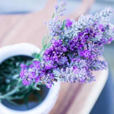 Harvesting & Drying Lavender
