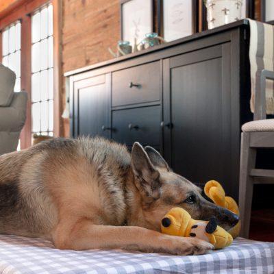 DIY Extra Large Dog Bed