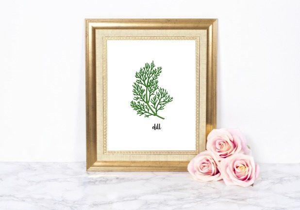 Dill Herb Printable