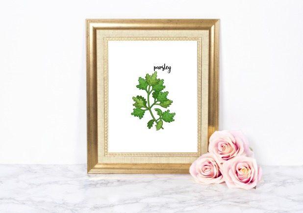 Parsley Herb Printable