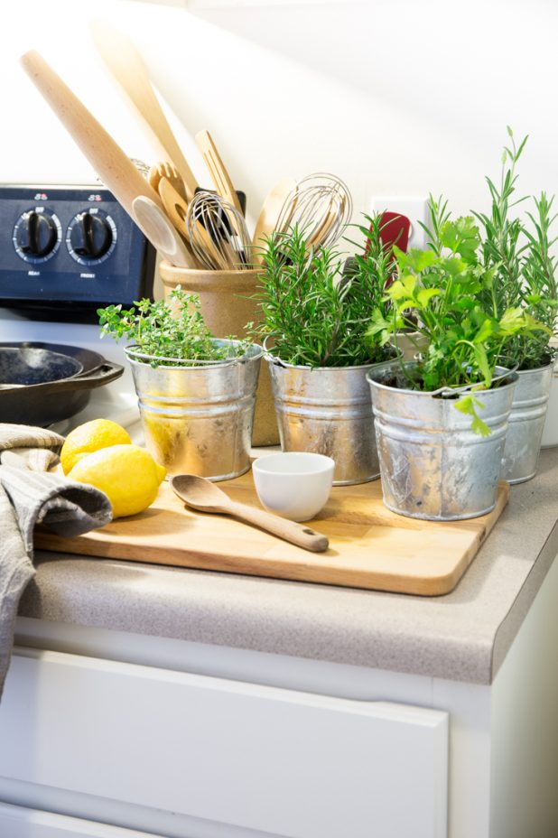 How to Create a Kitchen Herb Garden When Living in a Small Apartment Space