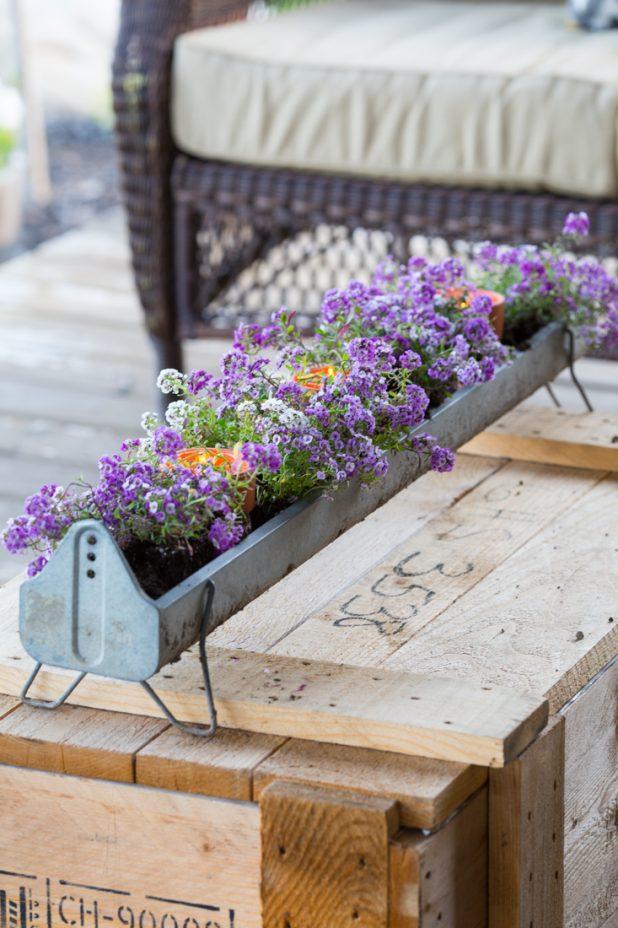 Turn an old galvanized chicken feeder into a flower planter