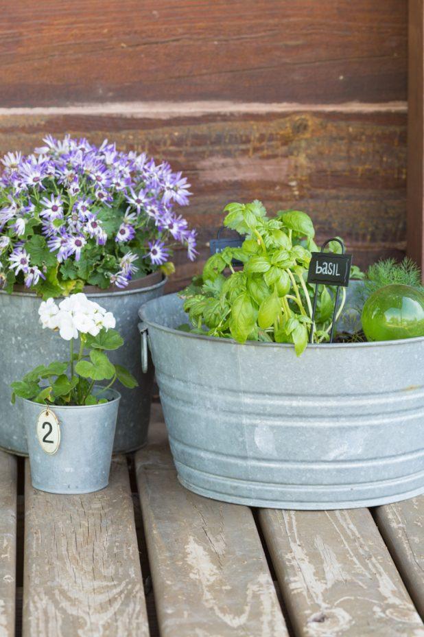 Herb Garden Planted in Galvanized Buckets
