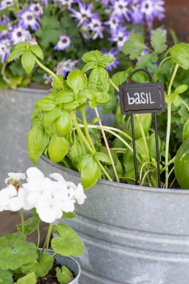 Easy To Make Herb Garden Using Galvanized Buckets