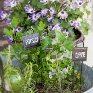 Kitchen Herb Garden In Galvanized Buckets
