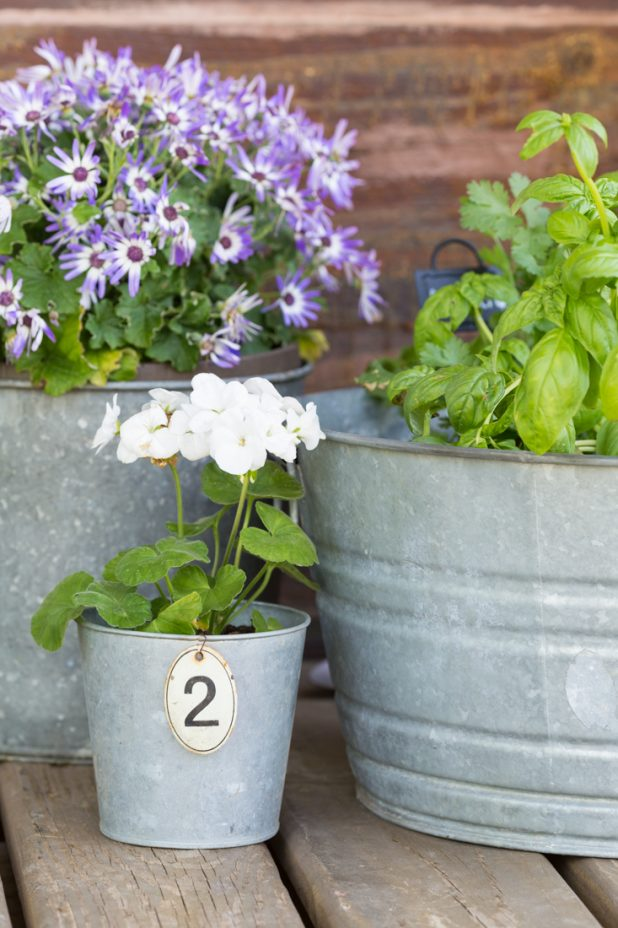 Herb and Flower Garden Planted In Galvanized Buckets