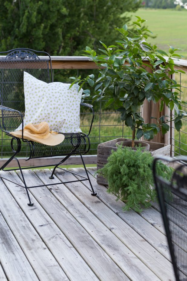 Potted Lime Tree, Great For Small Porch Areas, Can Be Grown Inside Also In Cold Climates