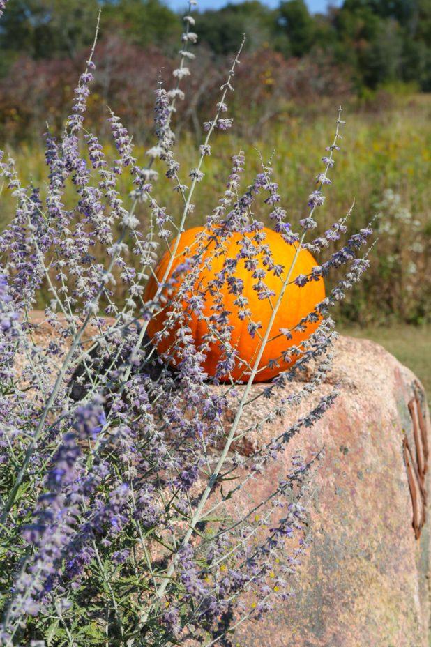 Fall Landscape Drought