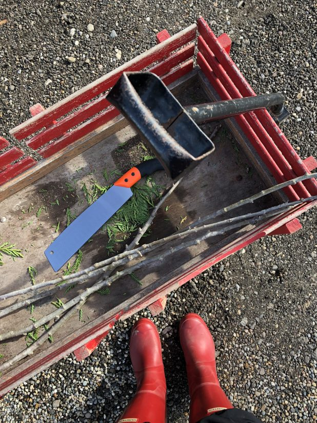 Vintage Red Wagon Used to Haul Pine Trees and Clippings for Christmas Decorating