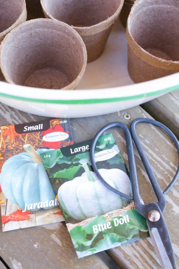 Pumpkin Seeds to Start Indoors