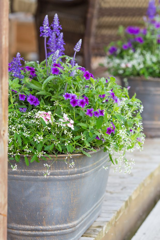 Summer Flowers In Containers That Bring Curb Appeal To Any Home