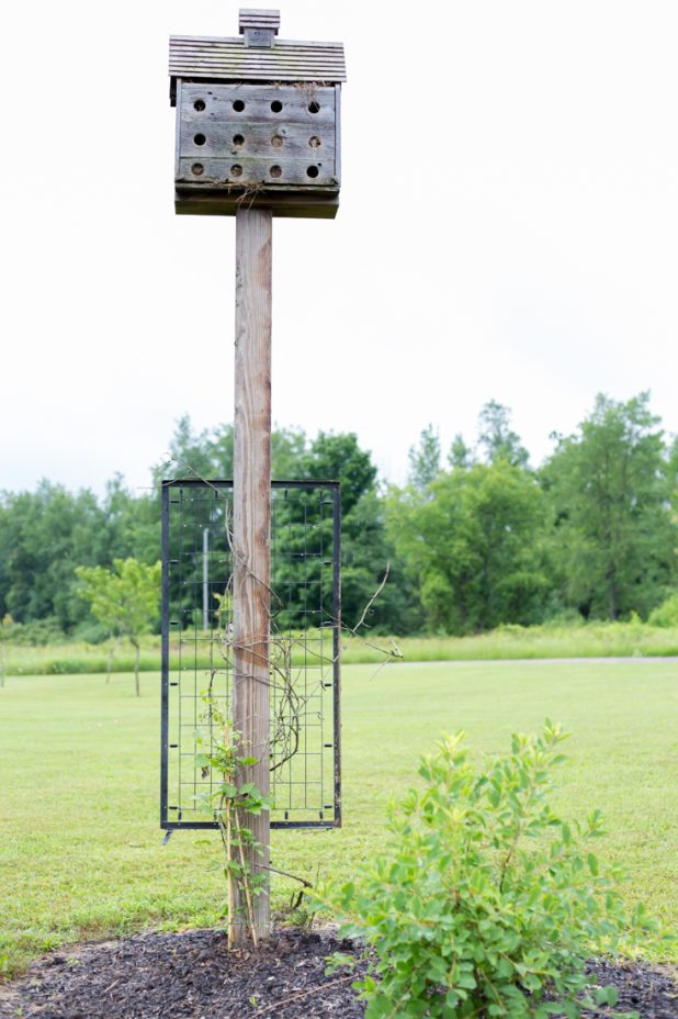 Crib Spring Trellis For Junk Gardeners And Their Climbing Plants