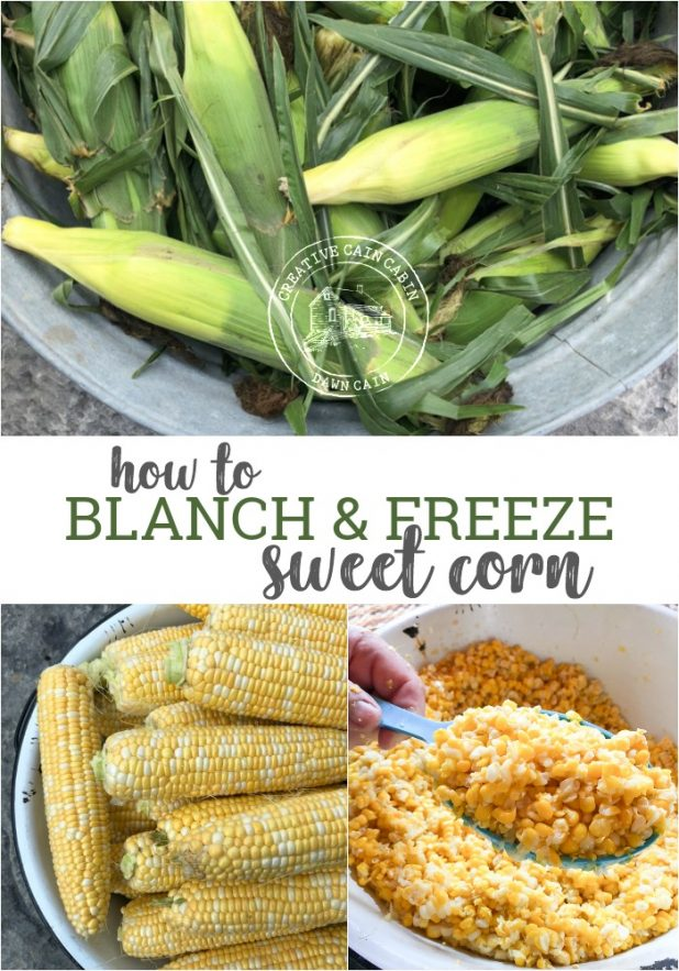 Step by step photo tutorial on how to blanch and freeze sweet corn the easy way. I'll share with you how many quarts of corn you'll get with one bushel of corn.