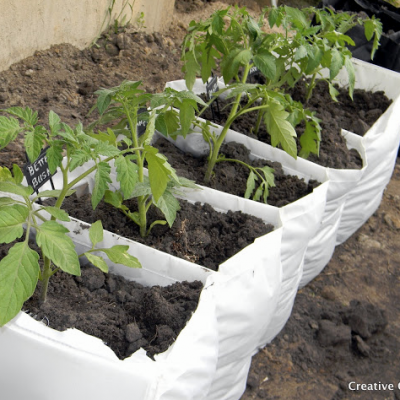 Vegetable Garden in a Bag