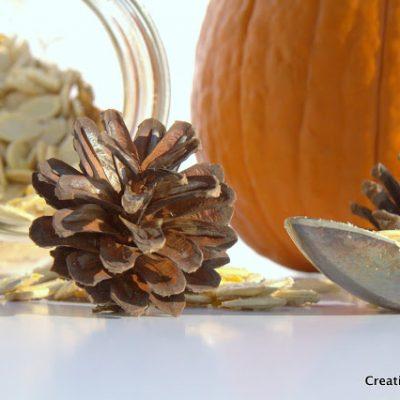 Pumpkin Seed Photo Shoot