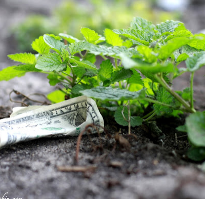 How to Grow Money