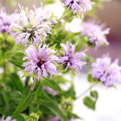 Wildflower Centerpiece #6