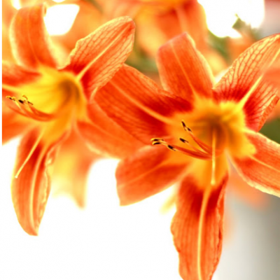 Wildflower Centerpiece #5