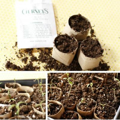 Start your Garden Seeds on the Cheap