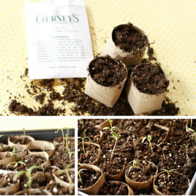 Start your Garden Seeds on the Cheap