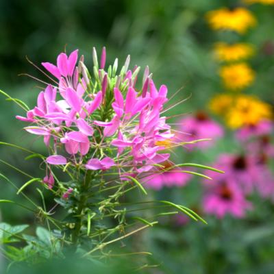 Flower and Sculpture Garden Tour {Part 2}