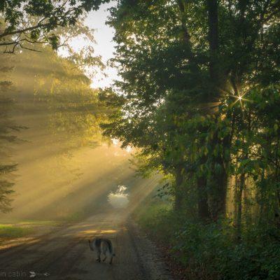 A Morning's Walk