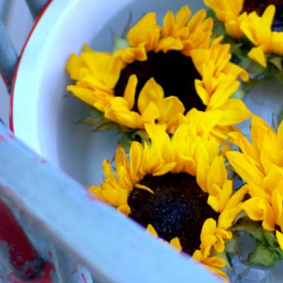 Sunflowers & Enamelware