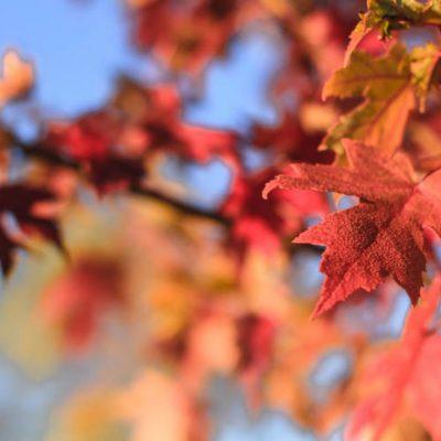 Fall the Season, and My Mishap