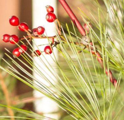 Natural Element Christmas Decor
