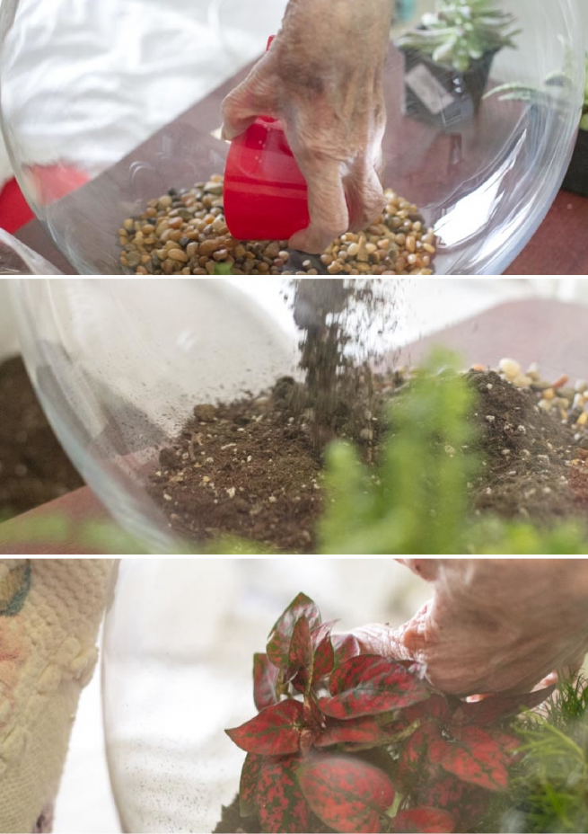 How to Assemble a Mini Garden