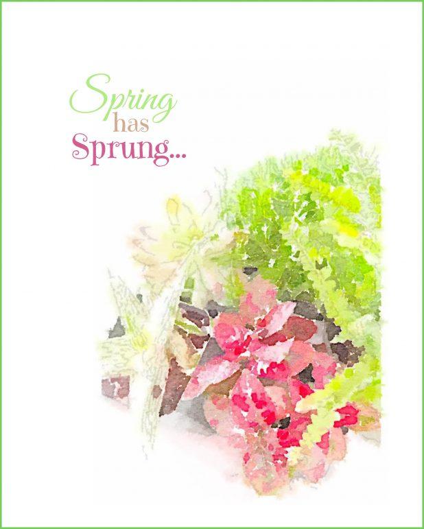 Spring Has Sprung Watercolor Printable