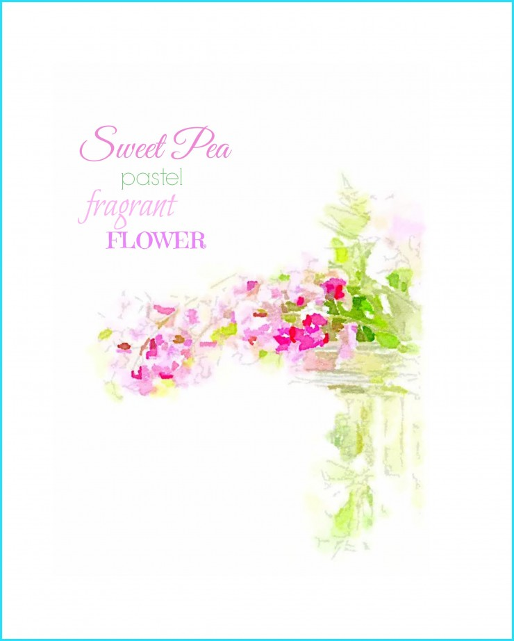 Sweet Pea Watercolor Printable