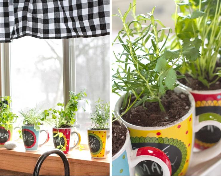 Coffee Mug Herb Garden
