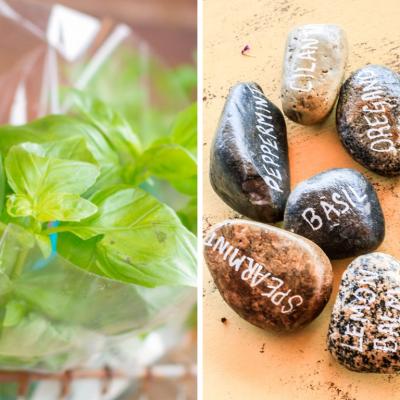 Annual & Perennial Herb Garden Cheat Sheet