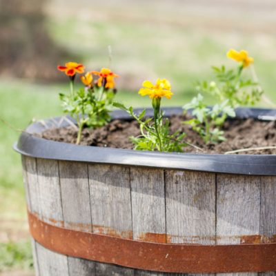 Whiskey Barrel Container Garden