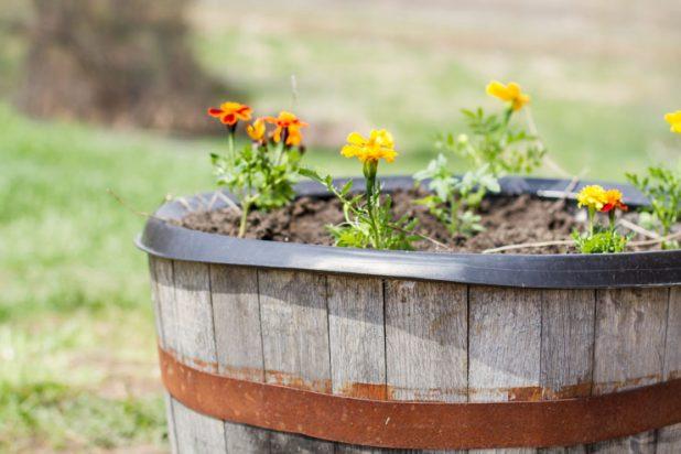 Whiskey Barrel Container Garden