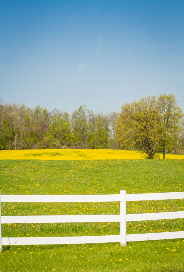 Countryside | Wild Mustard Field | Pure Michigan | Country Living | https://twitter.com/CCainCabin | www.facebook.com/creativecaincabin | http://www.pinterest.com/dawncain/ | #Michigan #CountryLiving