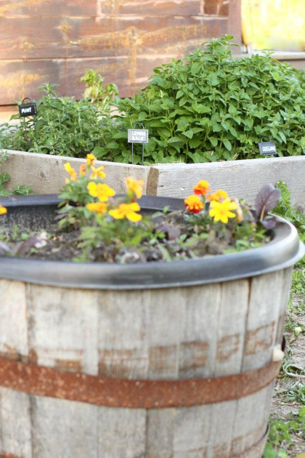 Raised Bed Herb Garden | twitter.com/CCainCabin | http://www.pinterest.com/dawncain/ | twitter.com/CCainCabin | http://www.pinterest.com/dawncain/ | www.facebook.com/creativecaincabin | #RaisedBedGardening | #HerbGarden