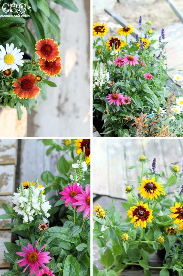 Perennial Garden Flowers | Creative Cain Cabin