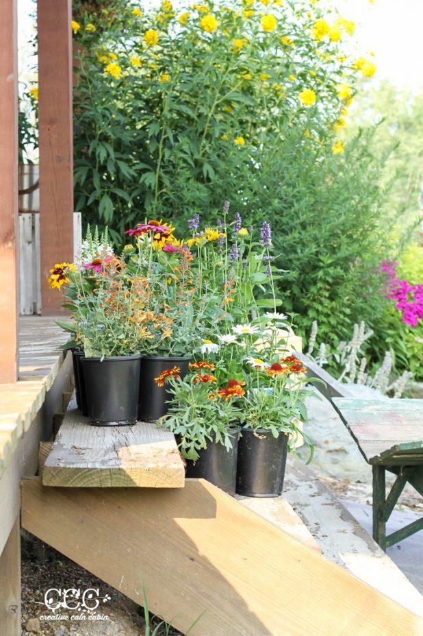 Perennials   Creative Cain Cabin