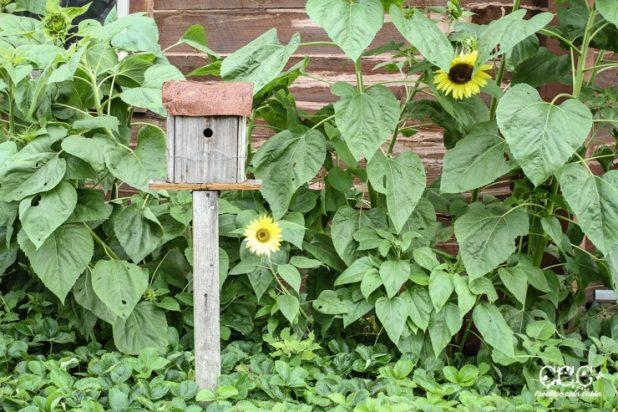 Birdhouse and Sunflowers   Creative Cain Cabin