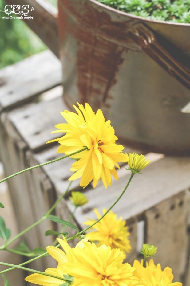 False Sunflower Blooms   Creative Cain Cabin