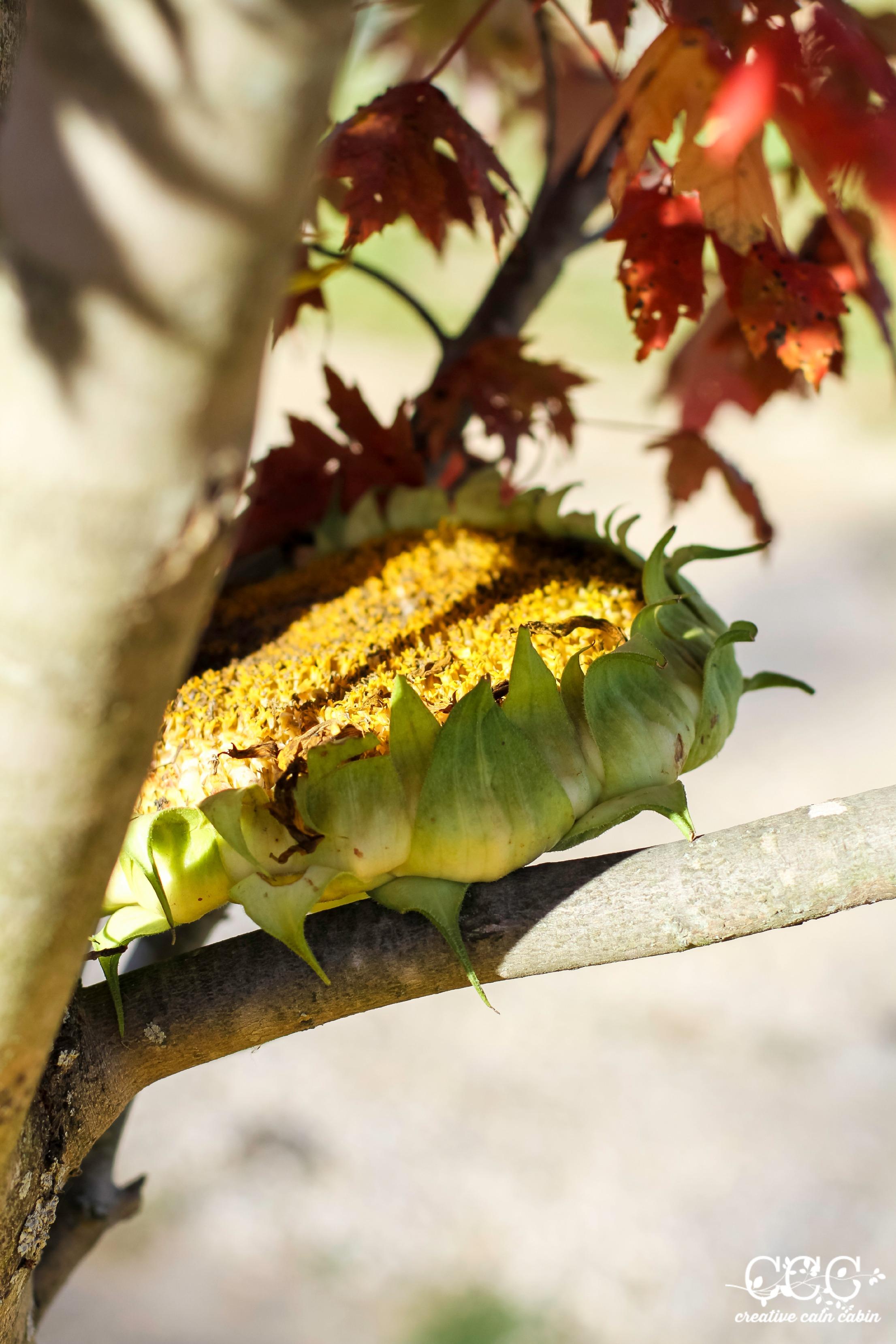 Bird Feeder Sunflower Head | Easy DIY | Creative Cain Cabin