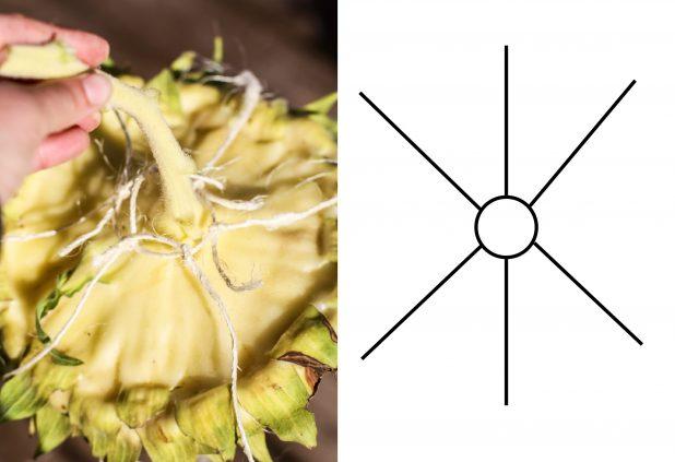 Sunflower Head Hanger   Easy DIY   Sunflower Birdfeeder   Creative Cain Cabin